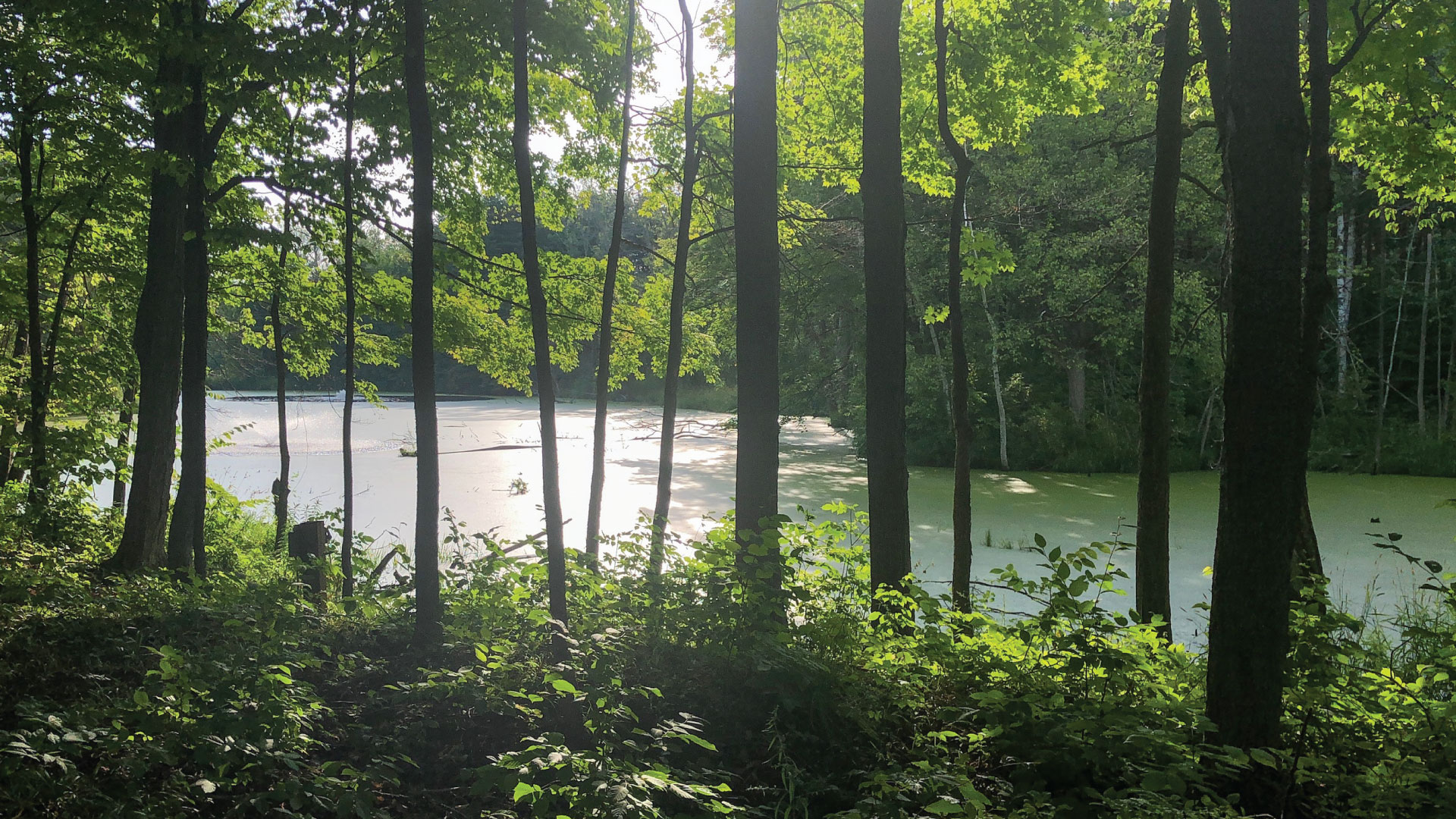 Pond in a forest on the Scandinave Spa Blue Mountain property.